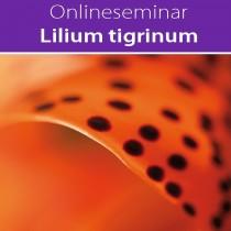 Online-Seminar Lilium tigrinum in all seinen Facetten