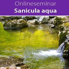Online-Seminar Sanicula aqua in all seinen Facetten