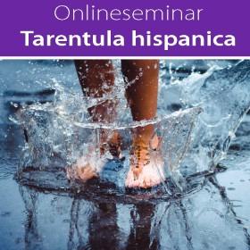 Online-Seminar Tarentula hispanica in all seinen Facetten