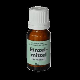 Ustilago zeae (Maisbeulenbrand)