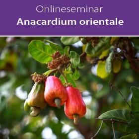 Online-Seminar Fachseminar in klassischer Homöopathie Anacardium orientale in all seinen Facetten