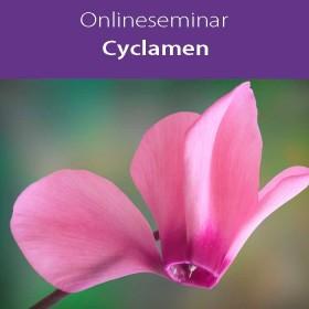 Online-Seminar Fachseminar in klassischer Homöopathie Cyclamen europaeum in all seinen Facetten