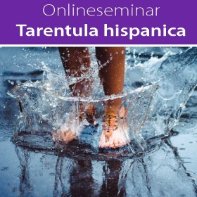 Online-Seminar Tarentula hispanica in all seinen Facetten